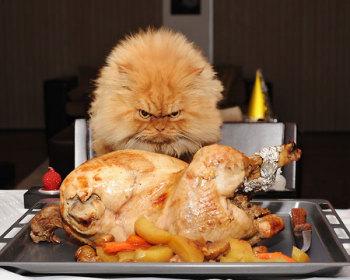 Macja me nevirke ne bote!